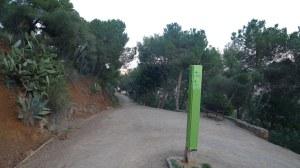 Un dels camins de la zona boscosa.