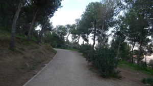 Camí a la zona boscosa del parc.