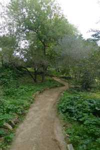 Camí de baixcada al sot de l'Estany.