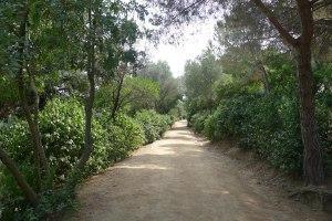 Camí a l'interior del parc.