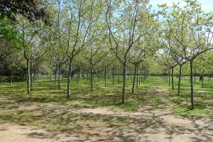 Una de les arbredes del parc.