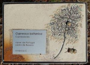 Detall de placa ceràmica amb informació sobre vegetació.