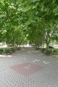Passeig amb plàtans d'ombra a l'eix central.