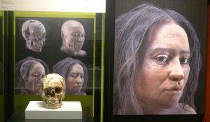 Crani i fases reconstruccio forense del rostre.