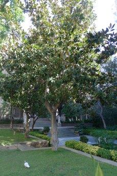 Un dels arbres del jardí.